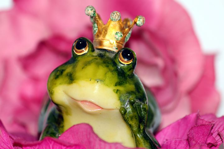 Frog, Toad, or Prince?